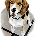 Canine Cutie by Ferrel Cordle