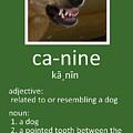 Canine Poster by Kathy K McClellan