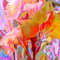 Canna Abstract 3 by M Diane Bonaparte