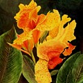 Canna Lilies by Vickie Voelz