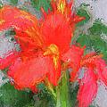 Canna Lily 3 by John Freidenberg