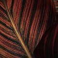 Canna Leaves by Nadalyn Larsen