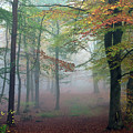 Cannock Chase Autumn 014 by Ron Evans