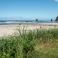 Cannon Beach And Purple Bloom by Tom Cochran