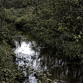 Cannon Beach Creek by David Patterson