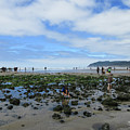 Cannon Beach Tide Pools by Susan Molnar
