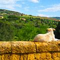 Cano Di Agrigento by Joseph Re