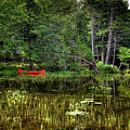 Canoe Among The Reeds by David Patterson