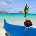 Canoe And Coconut by Dana Edmunds - Printscapes