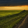 Canola And The Road Ahead by Wayne Sherriff