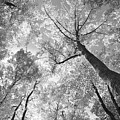 Canopy by Charles Owens