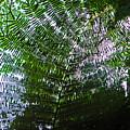 Canopy Of Ferns by Elizabeth Hoskinson