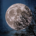 Winter Moon by Dennis Bucklin
