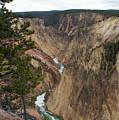 Canyon River by Linda Kerkau