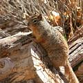 Canyon Squirrel by Donald Tusa