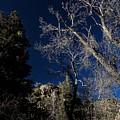 Canyon Tree by Buck Buchanan