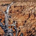 Canyon View Nevada by Joseph Yvon Cote