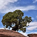 Canyonlands Tree by Flo McKinley