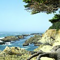 Cape Arago, Or. by Sherri Chritton