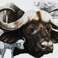 Cape Buffalo by Barbara Keith