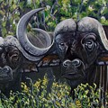 Cape Buffalo First Painting by Caroline Street