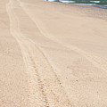 Cape Cod Beach With Tire Tracks by Michelle Himes