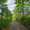 Cape Cod Rail Trail Trees Eastham Ma 2 by Toby McGuire