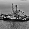 Cape May Fishing Fleet by Louis Dallara