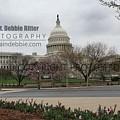 Capital 8656 by Captain Debbie Ritter