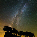 Caprock Canyon Bison Stars by Stephen Stookey