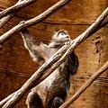 Captivity by Kristin Yata