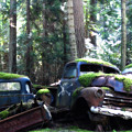 Car Lot In The Forest by Diane Smith