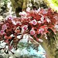 Carambola Flower by Jeelan Clark
