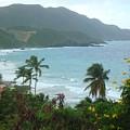 Carambola Photograph Virgin Islands by Anne-Elizabeth Whiteway