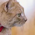 Caramel - Cat Profile by Cristina Stefan