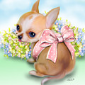 Caramel Chihuahua Baby by Catia Lee
