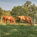 1006 - Caramel Horses I by Sheryl Sutter