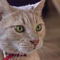 Caramel, The Cat by Cristina Stefan