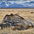 Carcass With A View by Kelley King