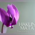 Card Hakuna by Wolfgang Stocker