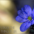 Card Little Anemone by Wolfgang Stocker