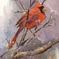 Cardinal - Male by Elizabeth Evans