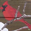 Cardinal 2 by Paul Bashore