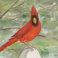 Cardinal by Bev Veals