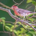 Cardinal Bird In The Wild In South Carolina by Alex Grichenko