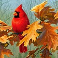 Cardinal by Dorothy Binder