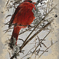 Cardinal by Gina Harrison