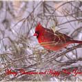 Cardinal Greetings by Rima Biswas