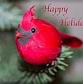 Cardinal Happy Holidays by Dawn Gari