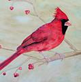 Cardinal II by Laurel Best